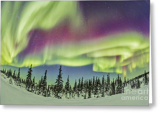 Nature Study Greeting Cards - Aurora Borealis Over Churchill Greeting Card by Alan Dyer