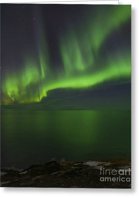 Reflection In Water Greeting Cards - Aurora Borealis Over Iceland Shoreline Greeting Card by Babak Tafreshi