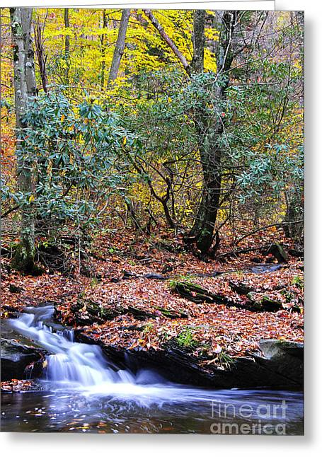 Autumn Along Birch River Greeting Card by Thomas R Fletcher