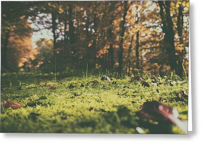 Autumn Carpet Greeting Card by Mountain Dreams