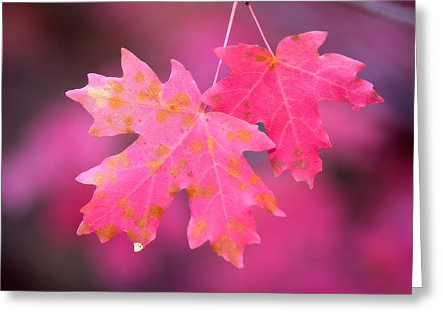 Autumn Color Maple Tree Leaves Greeting Card by Panoramic Images