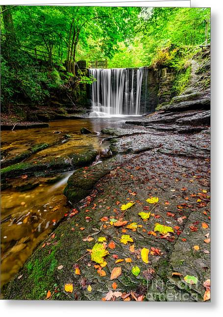 Autumn Leaves Greeting Card by Adrian Evans