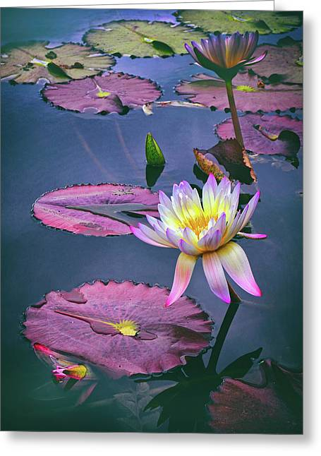 Lily Pond Greeting Cards - Autumn Lily Greeting Card by Jessica Jenney