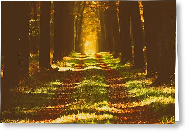 Analog Greeting Cards - Autumn Solitude Greeting Card by Ersi