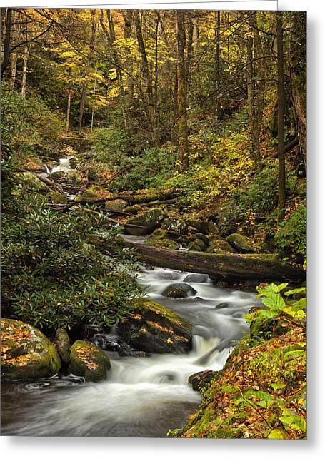 Great Smoky Mountains Greeting Cards - Autumn Stream Greeting Card by Andrew Soundarajan