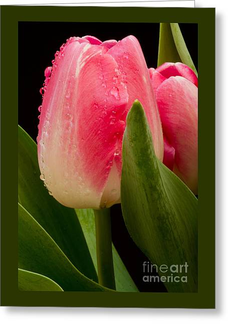 Bloosom Greeting Cards - Back To Spring Greeting Card by Nick  Boren