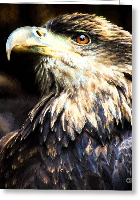 Science Greeting Cards - Bald Eagle  Greeting Card by Mim White
