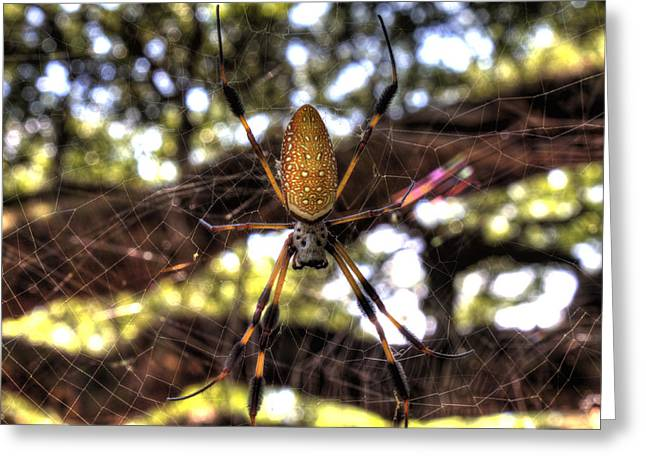 Woven Greeting Cards - Banana Spider Greeting Card by Dustin K Ryan