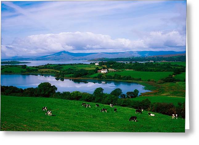 Creature Eating Greeting Cards - Bantry Bay, Co Cork, Ireland Greeting Card by The Irish Image Collection