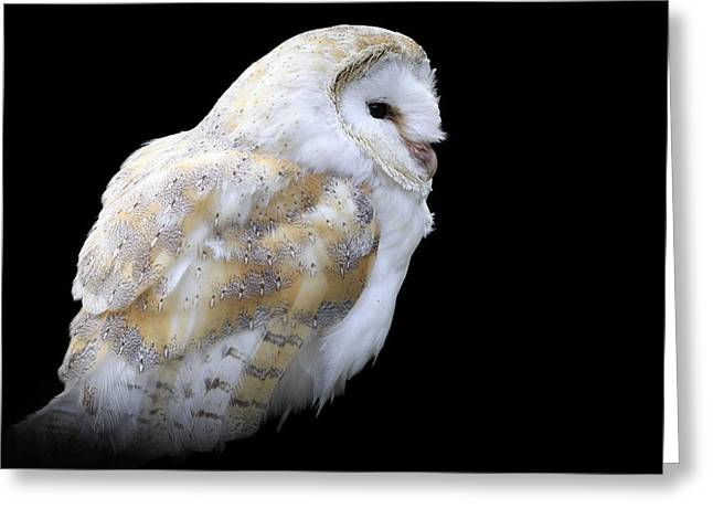 Hunting Bird Greeting Cards - Barn owl - Greeting Card by Chris Smith