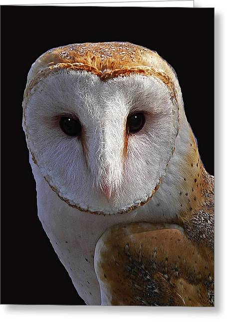 Barn Owls Greeting Cards - Barn Owl Greeting Card by Larry Linton