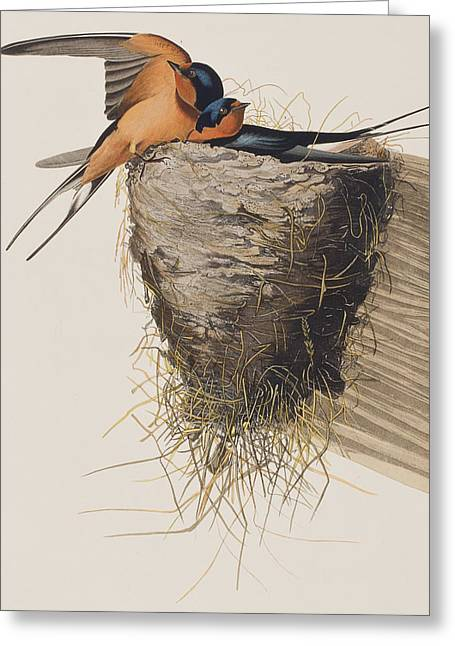 Mud Nest Greeting Cards - Barn Swallow Greeting Card by John James Audubon