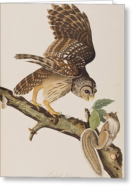 Barred Owl Greeting Card by John James Audubon
