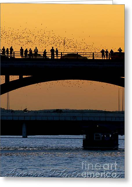 Austin. Bats Greeting Cards - Bat Flight in Austin Texas Greeting Card by Anthony Totah