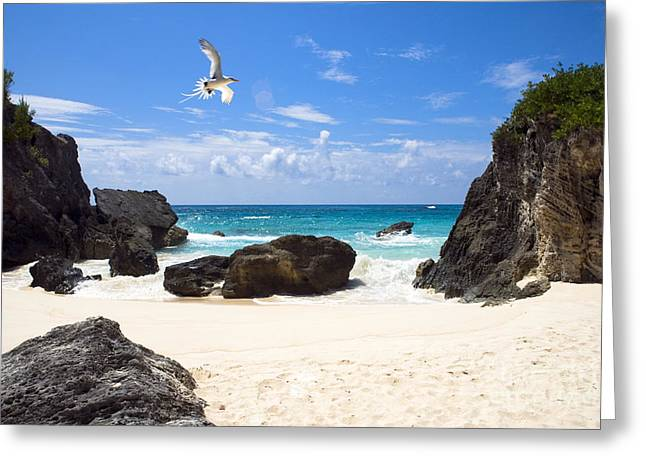 Seabirds Greeting Cards - Beach Bird Greeting Card by John Greim