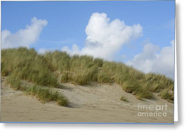 Sanddunes Greeting Cards - Beach Grass at Cannon Beach Greeting Card by Marv Vandehey