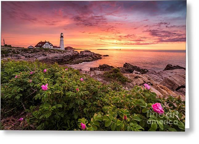Maine Beach Greeting Cards - Beach Rose at Portland Head Light Greeting Card by Benjamin Williamson
