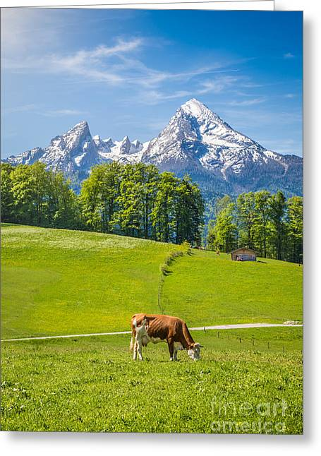 Grazing Snow Greeting Cards - Beautiful Bavaria Greeting Card by JR Photography