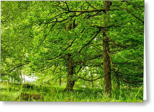 Desperate Greeting Cards - Beautiful forest  Greeting Card by Toppart Sweden