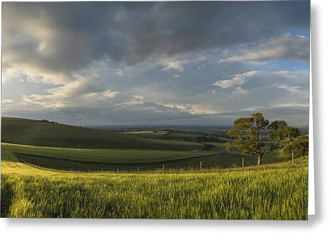 Field. Cloud Greeting Cards - Beautiful panorama landscape South Downs countryside in Summer Greeting Card by Matthew Gibson