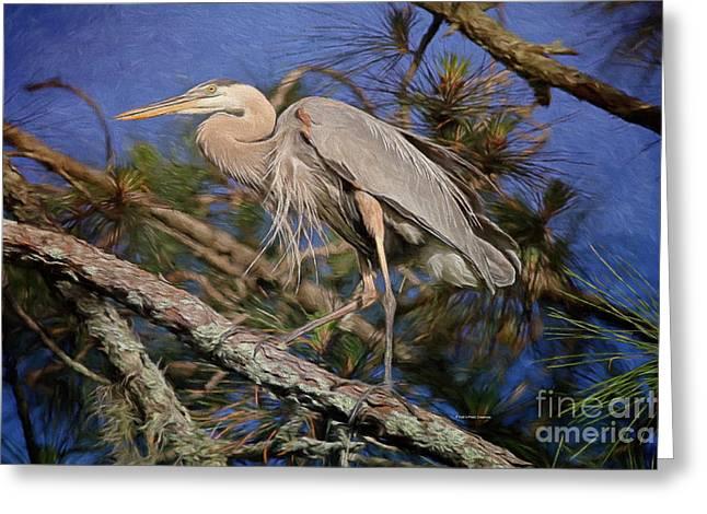 Deborah Greeting Cards - Beauty In The Pines Greeting Card by Deborah Benoit
