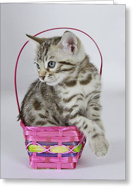 Easter Pyrography Greeting Cards - Bengal Basket Greeting Card by Shoal Hollingsworth