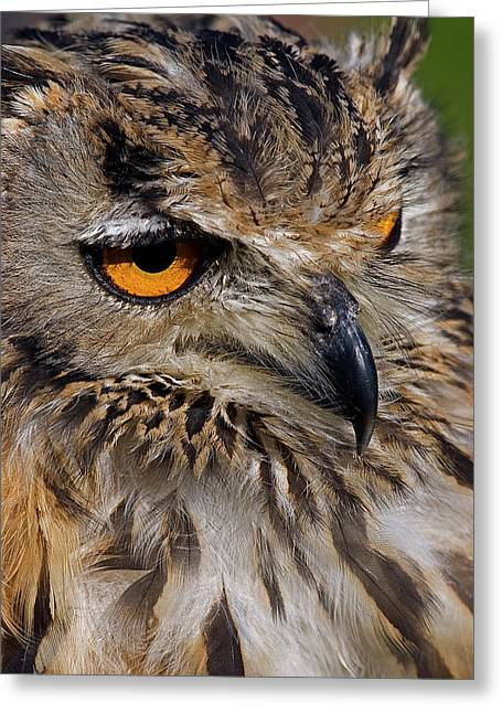 Skyhunter Greeting Cards - Bengal Eagle Owl Greeting Card by JT Lewis