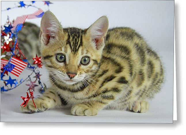Red White And Blue Pyrography Greeting Cards - Bengal Kitten  Greeting Card by Shoal Hollingsworth