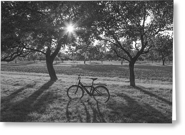 White Photographs Greeting Cards - Bicycle At Sunset Greeting Card by Milada Vierrova
