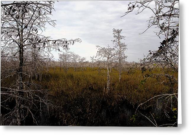 Saw Greeting Cards - Big cypress Greeting Card by David Lee Thompson