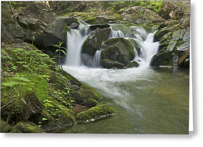 Yellow Dog Greeting Cards - Big Pup Falls 3 Greeting Card by Michael Peychich