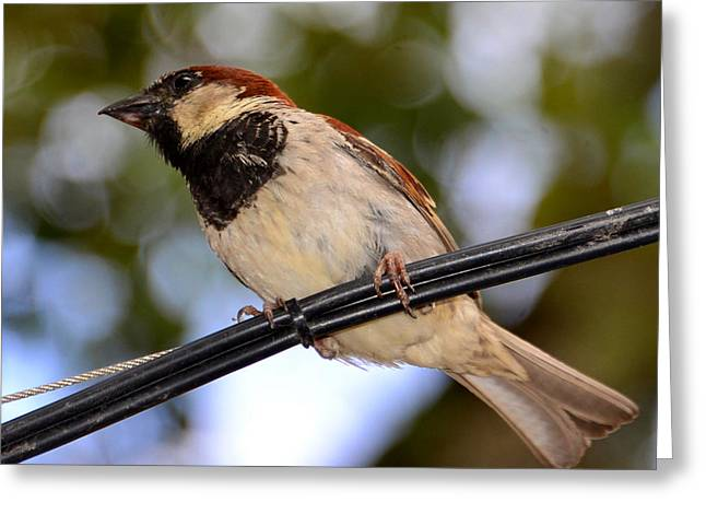 Bird On A Wire Greeting Cards - Bird on a wire Greeting Card by David Lee Thompson