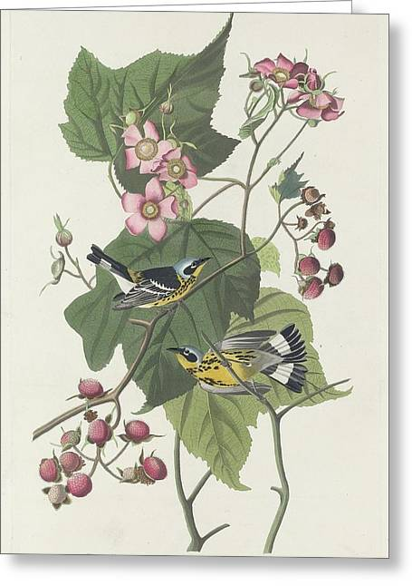Recently Sold -  - Engraving Greeting Cards - Black and Yellow Warbler Greeting Card by John James Audubon