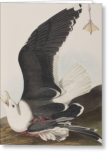 Webbed Feet Greeting Cards - Black Backed Gull Greeting Card by John James Audubon