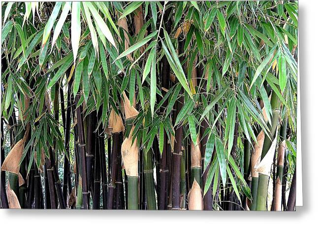 Black Bamboo Greeting Card by Mary Deal