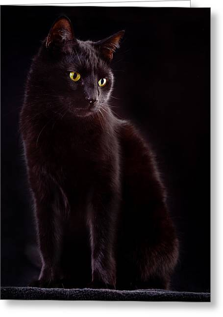 Pussy Greeting Cards - Black Cat Greeting Card by Dirk Ercken