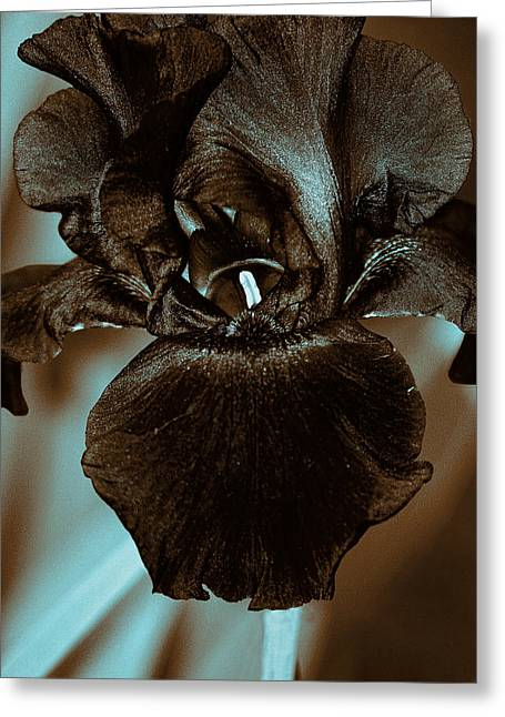 Eloquence Greeting Cards - Black Iris Greeting Card by Marcia Colelli
