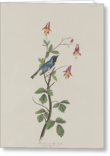 Warblers Greeting Cards - Black-Throated Blue Warbler Greeting Card by John James Audubon