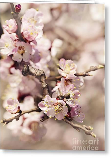 Blossom Greeting Card by Jelena Jovanovic
