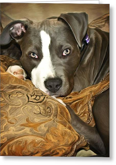 Apbt Greeting Cards - Blu Greeting Card by Deanna Maxwell
