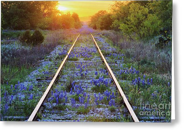 Blue Bonnets On Railroad Tracks Greeting Card by Jeremy Woodhouse