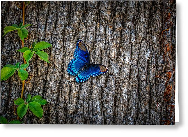Biology Greeting Cards - Blue Butterfly Greeting Card by Doug Long