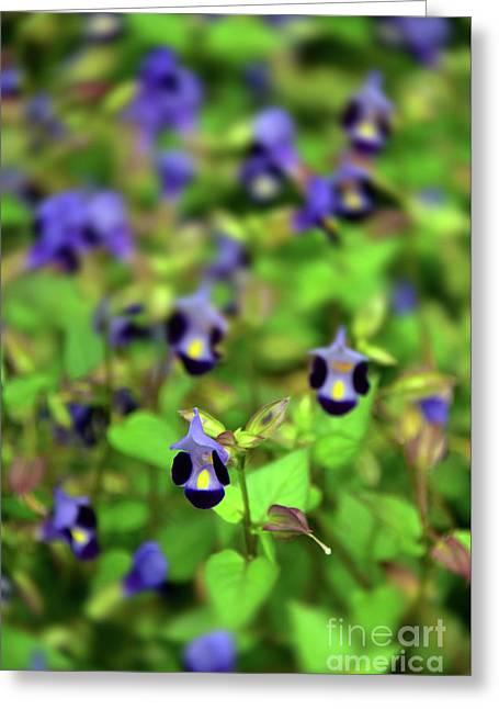 Blue Flowers Greeting Card by Svetlana Sewell