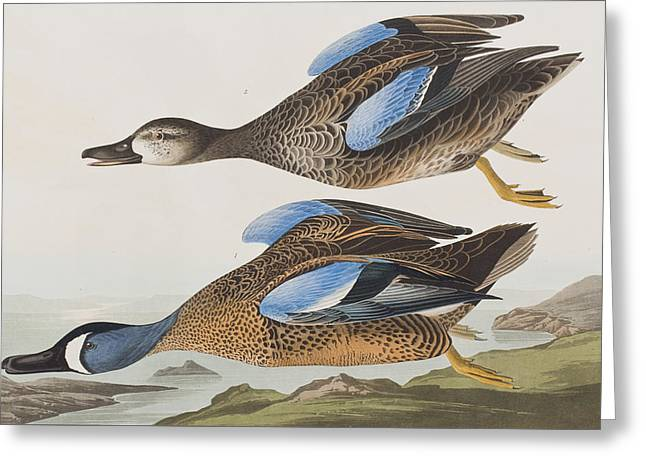 Blue Wings Greeting Cards - Blue Winged Teal Greeting Card by John James Audubon