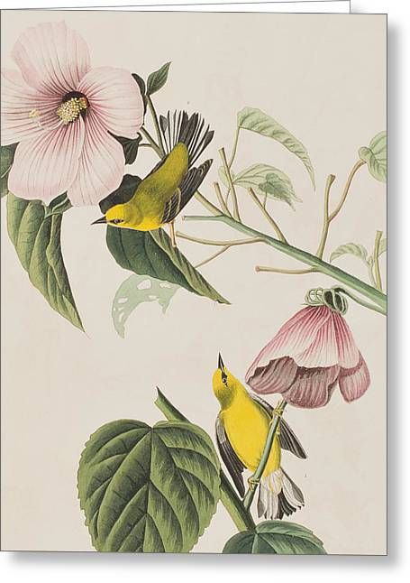 Blue Wings Greeting Cards - Blue-winged Yellow Warbler  Greeting Card by John James Audubon