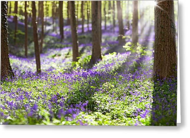 Scripta Greeting Cards - Bluebell Spring Wildflowers Greeting Card by Dirk Ercken
