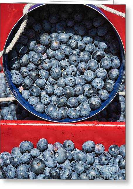 Blueberry Harvest Greeting Card by John Greim