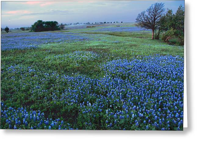 Recently Sold -  - Field. Cloud Greeting Cards - Bluebonnets at Dawn Greeting Card by Kevin Bain