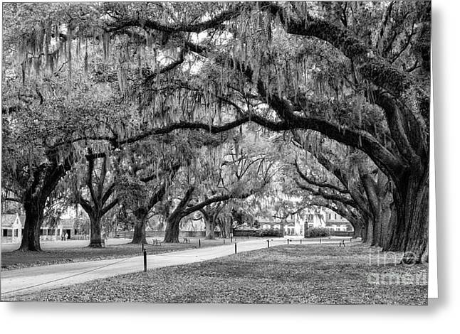 Southern Oak Trees Of The Old South Greeting Cards - Boone Hall Plantation Avenue of Oaks Mount Pleasant South Carolina Greeting Card by Dawna  Moore Photography