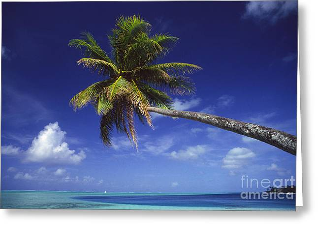 Overhang Greeting Cards - Bora Bora, Palm Tree Greeting Card by Ron Dahlquist - Printscapes